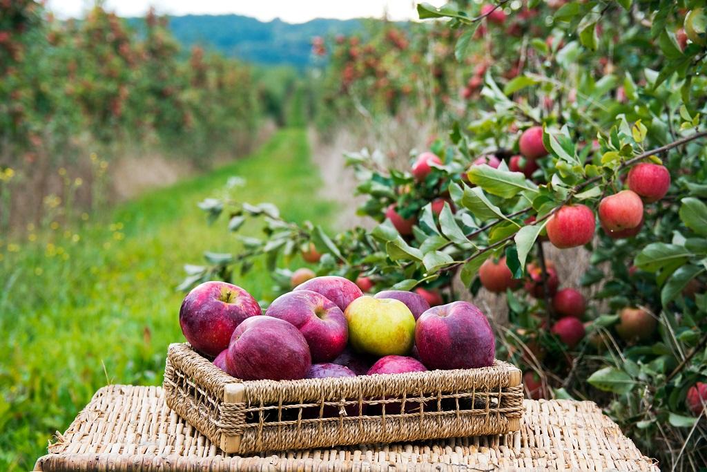 Pod Jabłonią fot. Siwiec Katarzyna